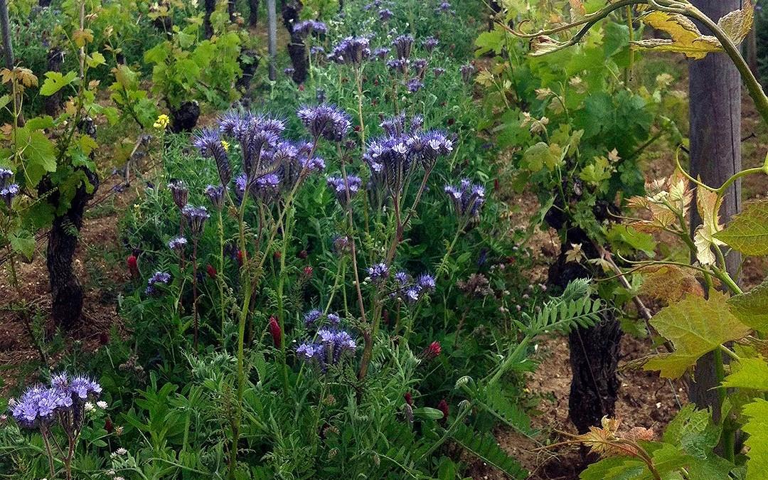 Nouvelle sélection de semences engrais verts été 2014